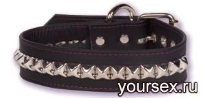 Кожаный ошейник с заклепками REDS 2077-02 BX DJ